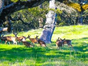 Deer running on sight