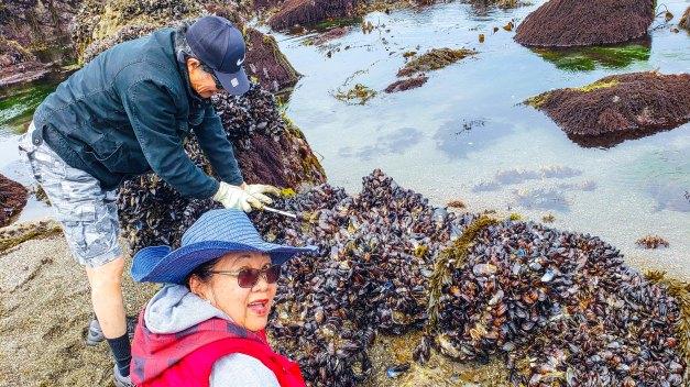 buckets of mussels