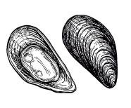 mussels-ink-sketch-vector-15720065.jpg